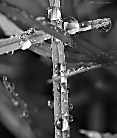 Droplet Cross Black & White