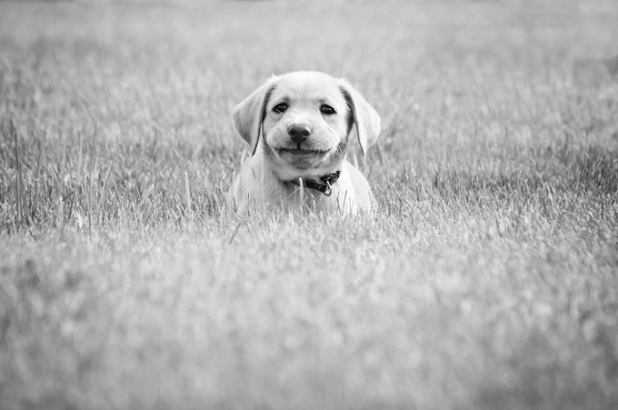 Mia Smile by KMHalaska - Kittens vs Puppies Photo Contest