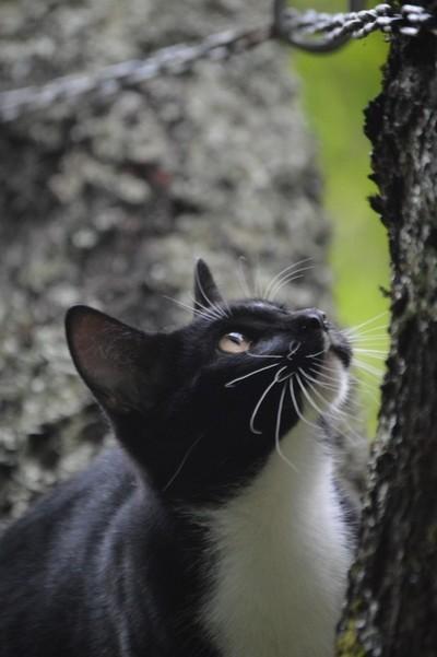 Curiosity of the Cat.