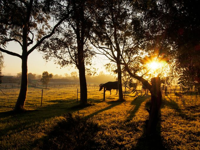 _7200003 by Pegasus5b - Silhouettes Of Trees Photo Contest