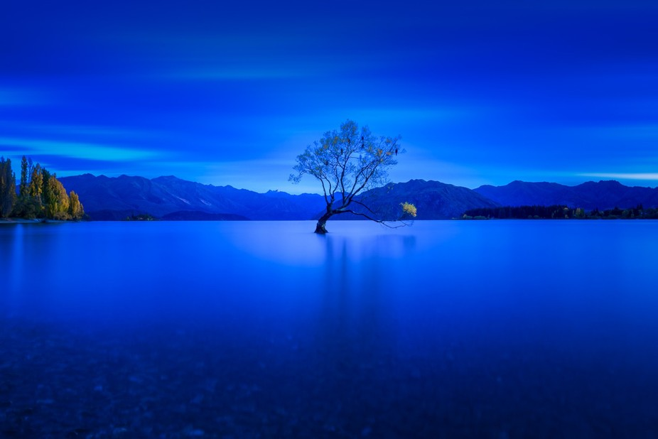 The icon, the famous Wanaka tree of New Zealand