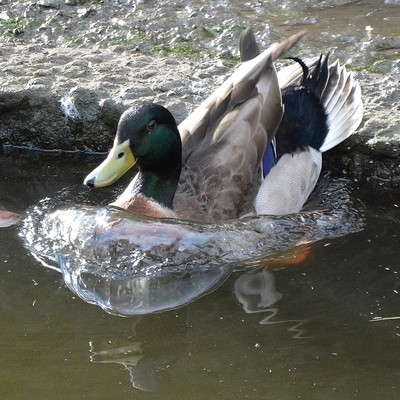 landing in the water