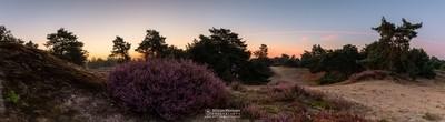 Panorama - Heather Twilight View