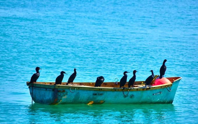 Cormorants in a Canoe