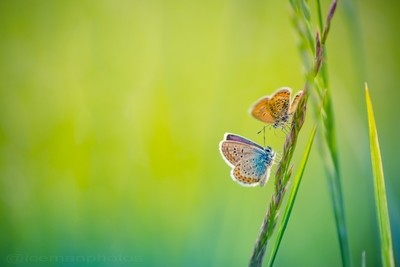 Beautiful summer background. Butterfly and soft background