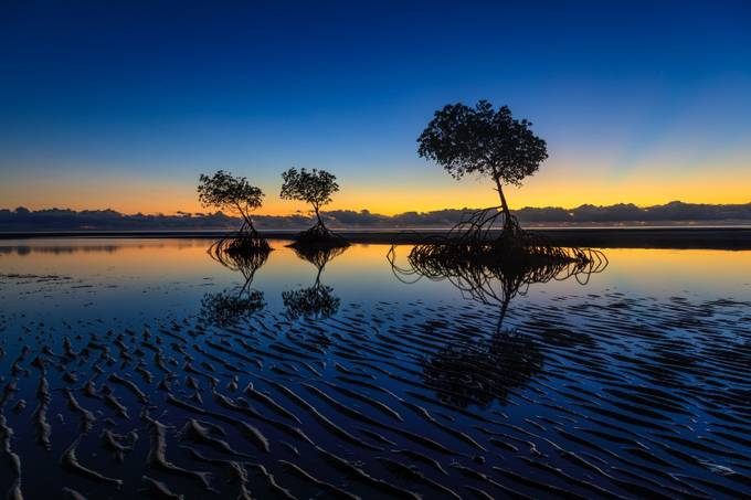 Morning Mangroves by ajay46 - Silhouettes Of Trees Photo Contest