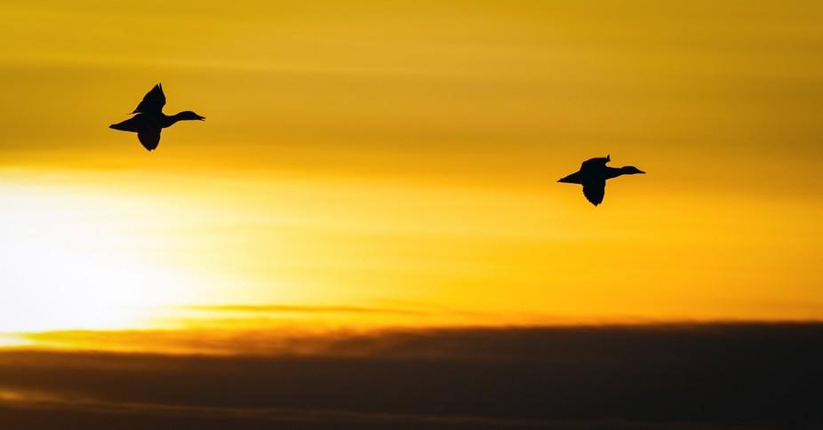 Sundown flyby