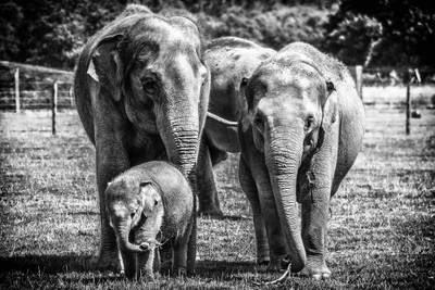 Protective family