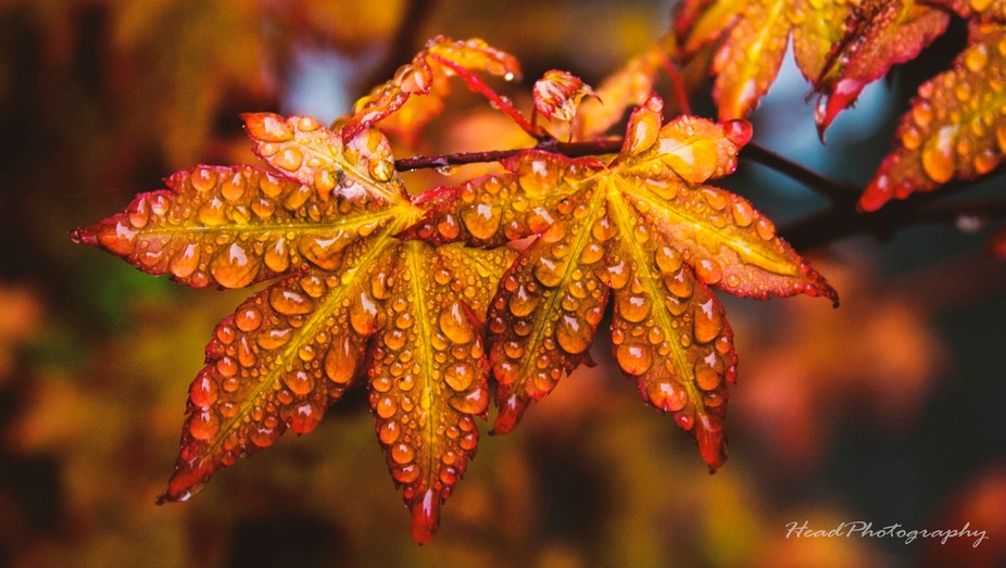 Using the colours of the leaf for vibrant and wonderful colour range. With added detial of water ...