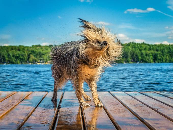 Cottage-Dog by tracymunson - Animals And Water Photo Contest