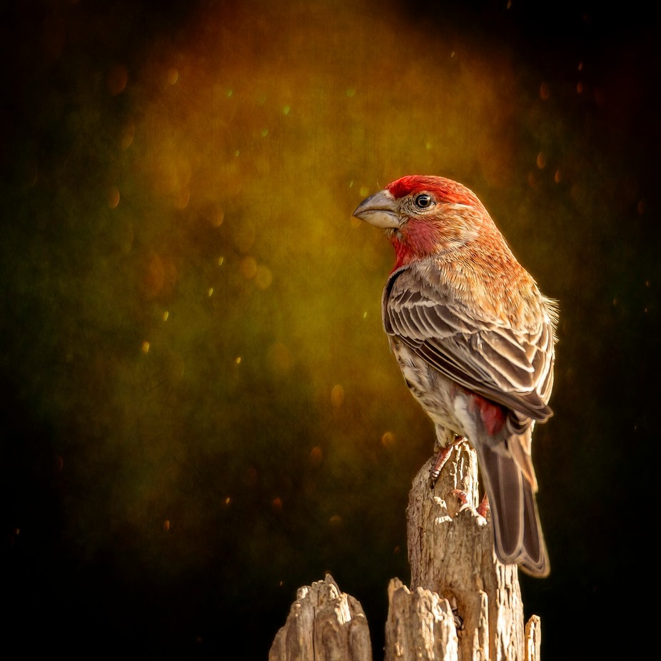 Finch From The Back by oddballz - Getting Creative Photo Contest