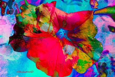_MAR3576.SPE_petunia blanc Evolution of a white petunia
