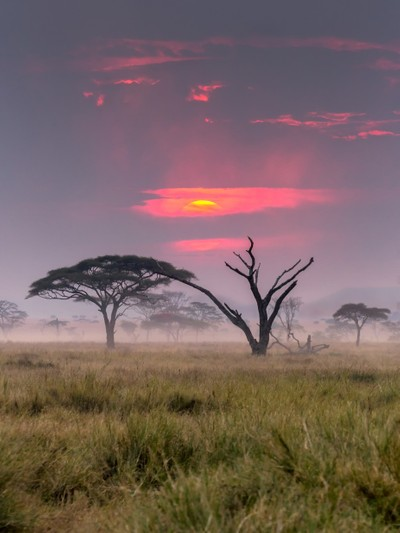 Trees of Serengeti II
