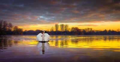 Dawn Swan revisited