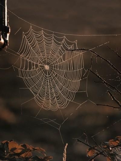 Diamond crusted web