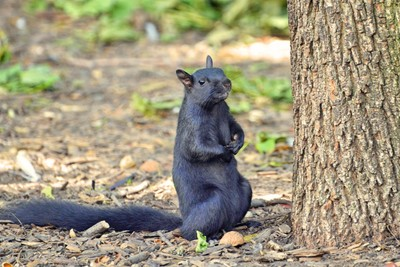 """Pardon me sir, you wouldn't happen to have a nut I could trouble you for?"""