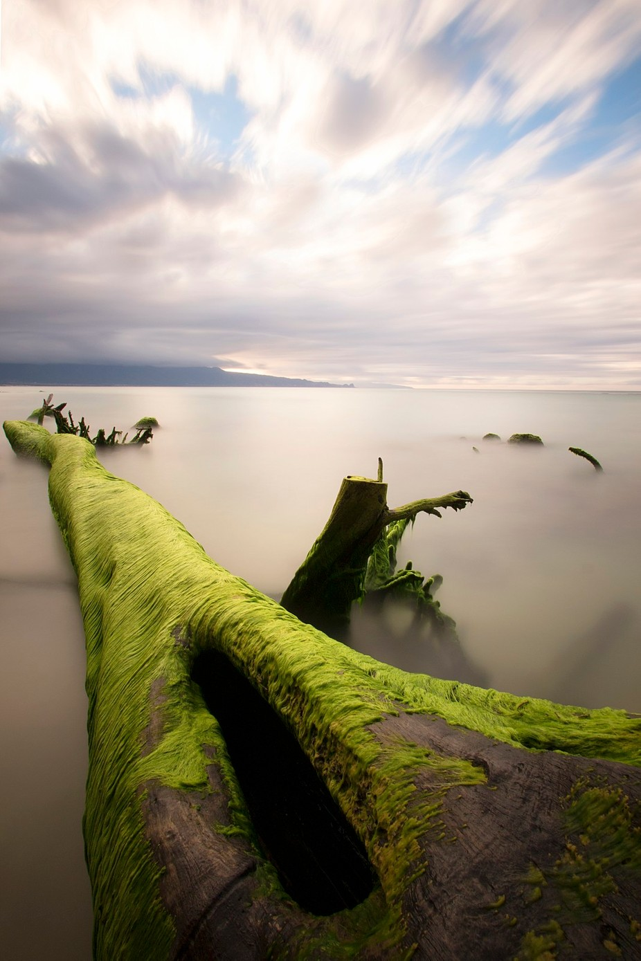The Green Tree  by Stu_Soley - The Moving Clouds Photo Contest