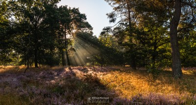 Panorama - Heather Light Rays