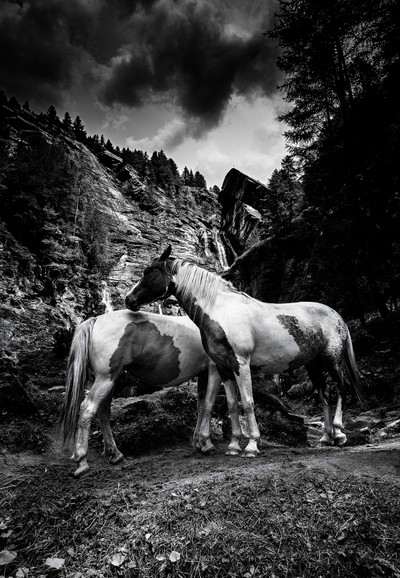 The horses and the storm