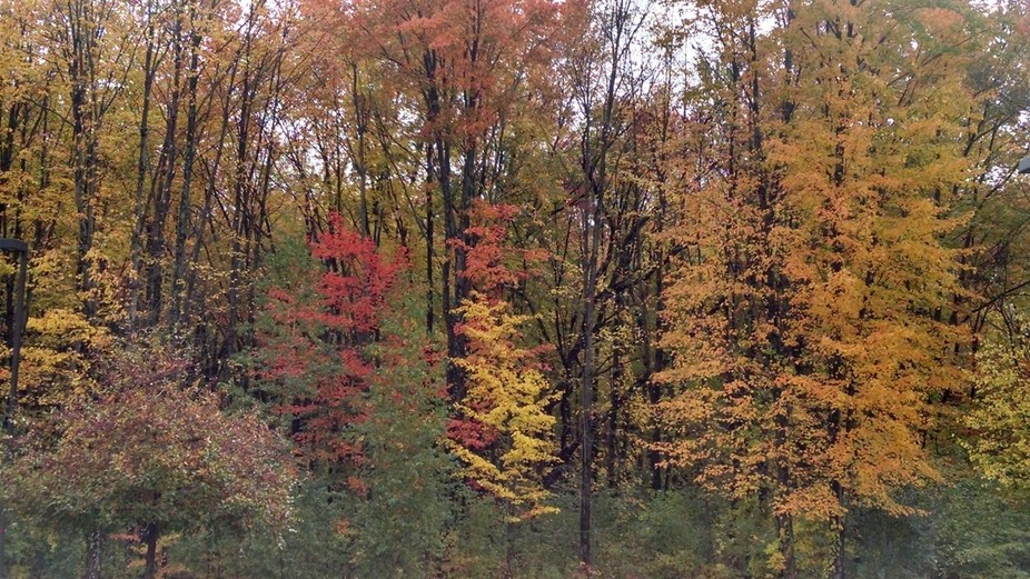 Fall foliage.   Just behind me is civilization,  gas stations, grocery stores,  ect.  But right h...