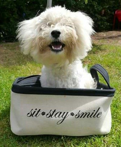 Sit, stay, smile in the sunshine