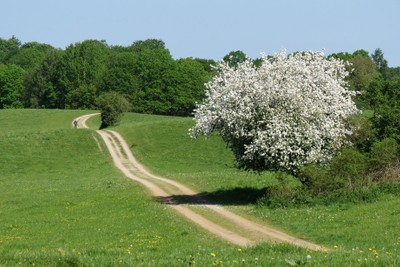 Spring, path in North Sealand