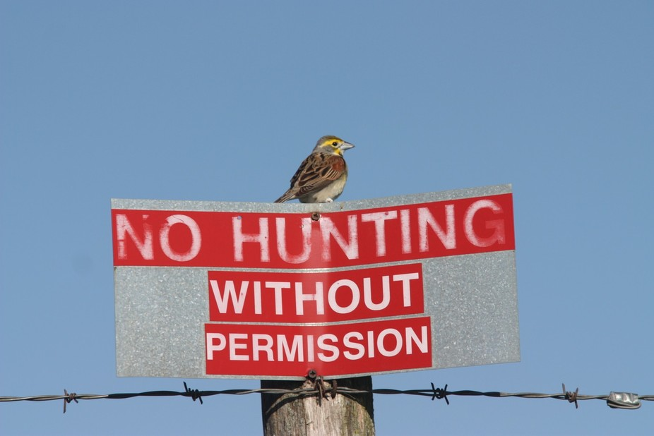 This my photo of a bird sitting on a No Hunting sign in northern Missouri.