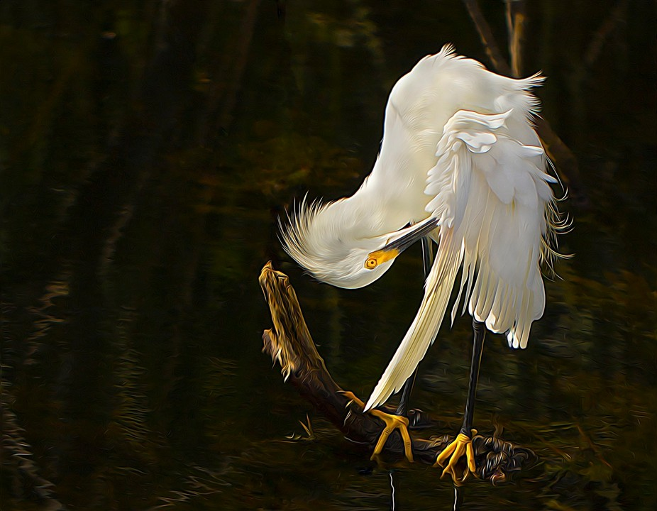 This image was taken at Shark Valley in Everglades National Park.  I then created a digital oil p...