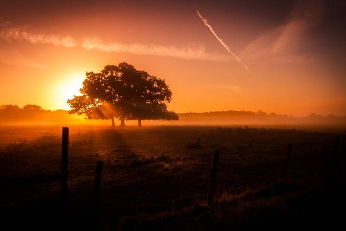 _MG_4981 by teddydomagalski - Silhouettes Of Trees Photo Contest
