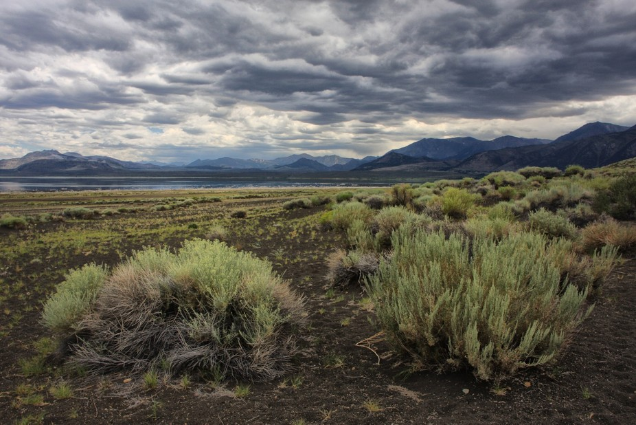 On a visit to the Sierras, I photographed this image near the beginning of the trail to Black Poi...