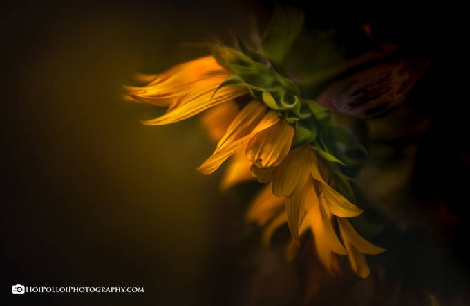 Mother Nature's Artwork by Merma1d - Yellow Beauty Photo Contest