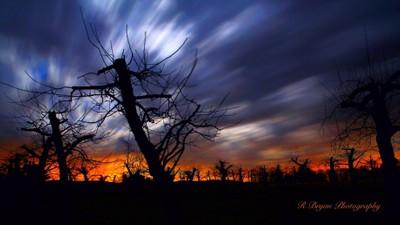 New Hamshire orchard at night