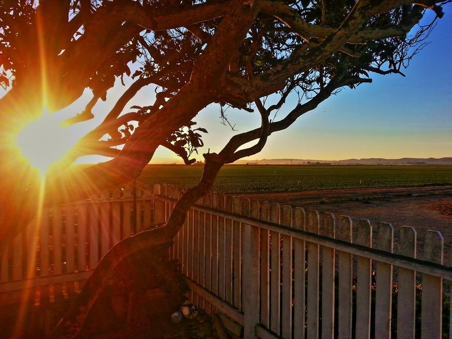 Sunrise at farm
