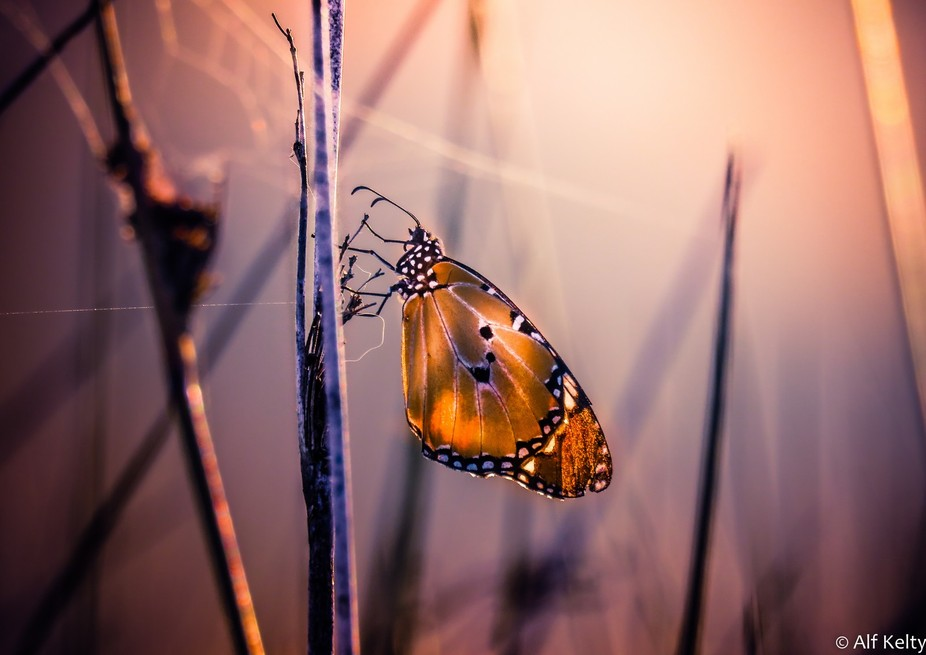 Went on an afternoon walk along the rivers edge and discovered this butterfly dead still among th...