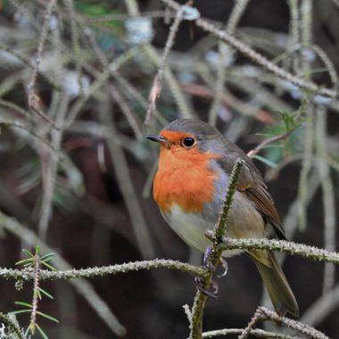 Nowt as Cute as a wee Robin ..... :-)