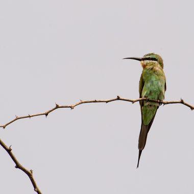 Birds in Lake Baring, Kenya