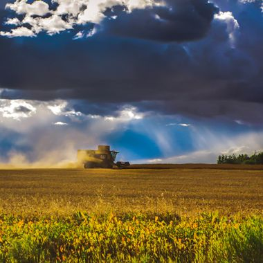Harvest, Hurrying To Bet The Storm