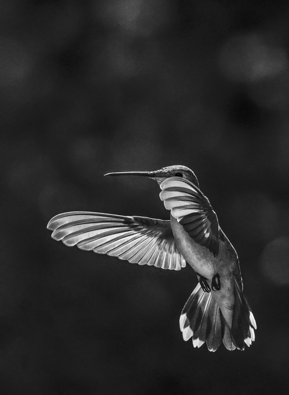 Small and Mighty and Mighty Small by GayleLucci - Hummingbirds Photo Contest