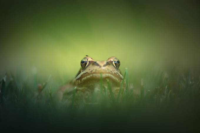 Frog by Anneliese-Photography - Small Wildlife Photo Contest