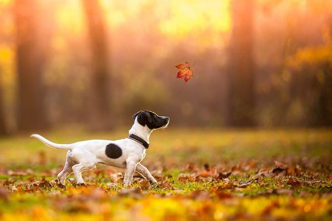 puppy in autumn by Anneliese-Photography - Getting Creative Photo Contest
