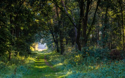 Forest Tunnel Into The Light