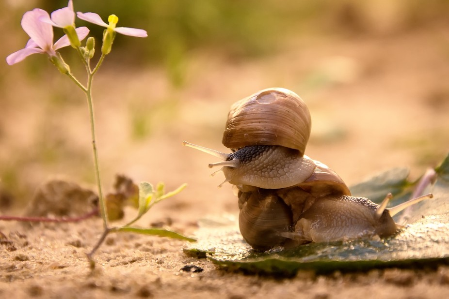 snails in nature