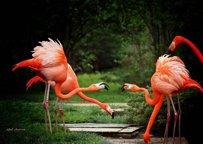 The Gathering Spot by Stellasview - Happening At The Zoo Photo Contest