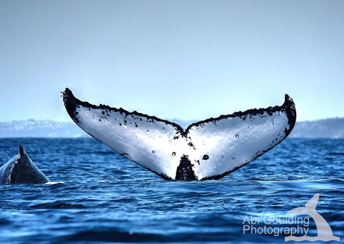 Into the Deep by abigoulding - Animals And Water Photo Contest
