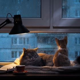 Cats in the window. Outside, rain, water drops on the glass. Twilight shines a desk lamp. It should be a cup with a drink, it is an open book. Co...