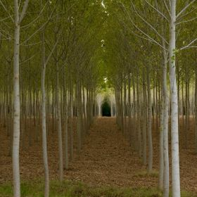 This amazingly planted forest is somewhere between San Gimignano and Pontedera in the heart of Tuscany. It looks like the nave of a church to me....