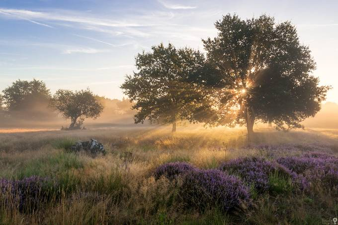 Autumnal Lasershow by flomotionfotografie - The First Light Photo Contest