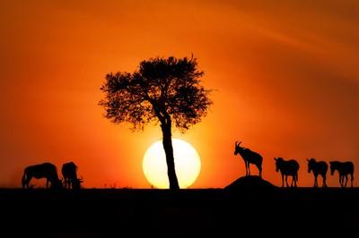 Masai sunrise