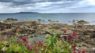 Where The Flowers Meet The Sea