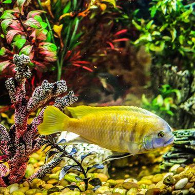 Photo of fish underwater